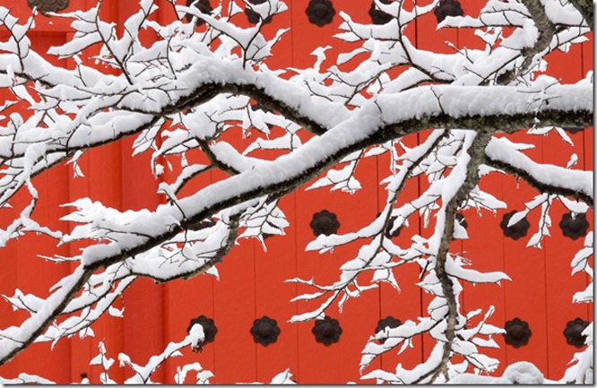 Art Wolfe Tree