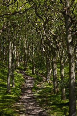 Landscape shot taken on Exmoor
