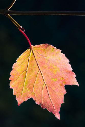 Autumn Close Up Macro And Still Life Photography Tips