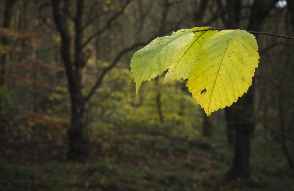 Autumn Close-Up Photo Tips For Point & Shoot Digital Cameras