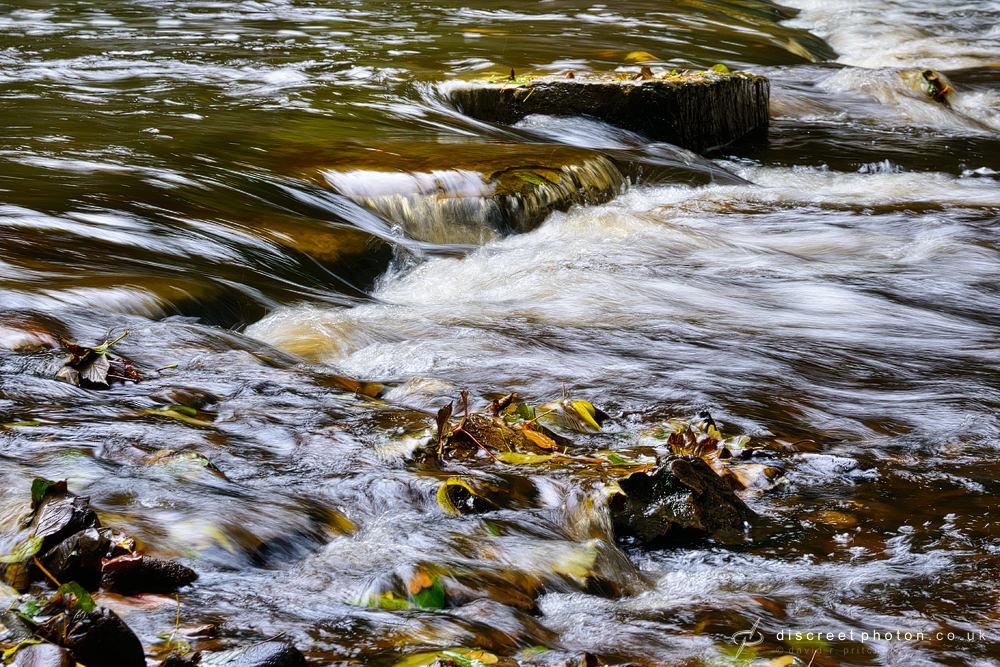 Fallen leaves water