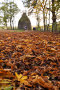 Thumbnail : Autumn Photography Tips: Fallen Leaves