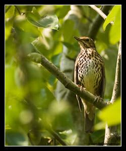 Bird photography advice