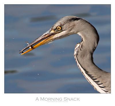 Bird photography help