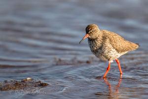 Birdwatching In Finland With Peter Kastner