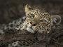 Thumbnail : Botswana Wildlife Shot Wins Photo Of The Week Accolade