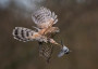 Thumbnail : British Wildlife Photography Awards Now Open