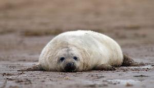British Wildlife Photography Tips
