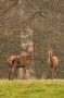 Thumbnail :  British Wildlife Photography Tips