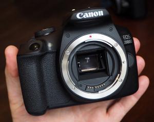 Canon EOS 2000D Sample Photos