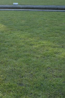 Pentax K-7 vs Canon EOS 50D: Pentax foliage test