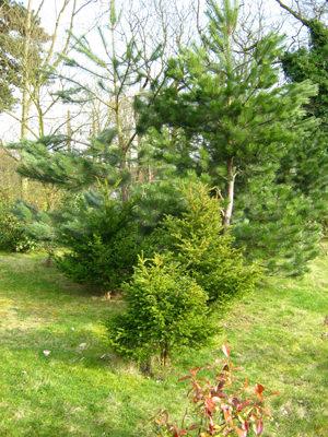Canon Powershot A800 foliage