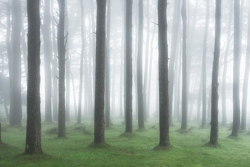 Dartmoor Ashburton woods