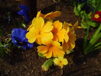 Casio Exilim ZS5 flowers