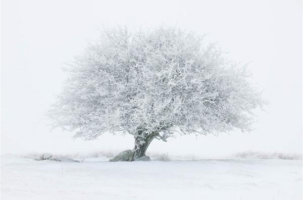 Thumbnail : Combat Blue Snow With Your Nikon Camera