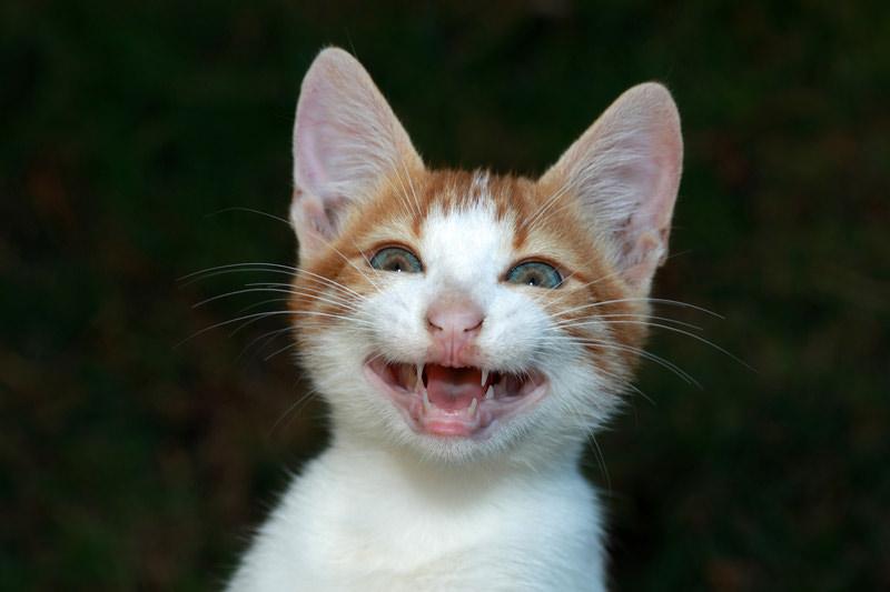 grinning-cat.jpg