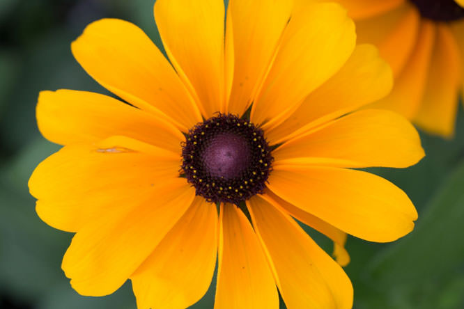 Denise flower 1