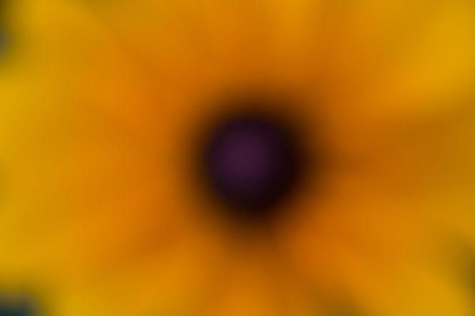 denise defocussed flower