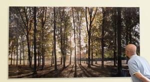 David Anthony Hall's Autumn Leaves