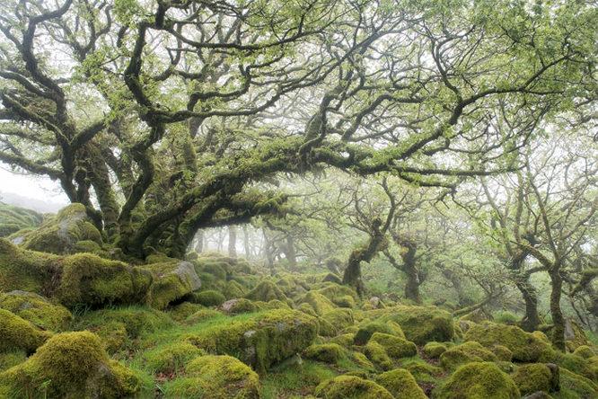 David Clapp tree