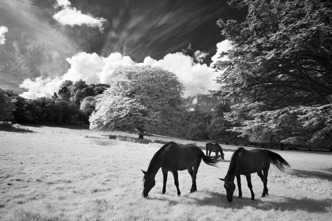 David Noton - Dorset Infrared