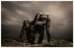 Two apes