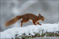 Photography competition winner shot of a squirrel