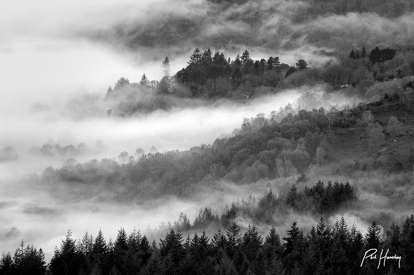 misty forest Hemsleyphoto