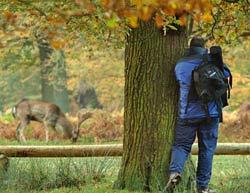 ePHOTOzine Deer Shoot!