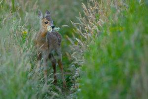 Edinburgh Photographer Awarded Scottish Nature Photographer Of The Year Accolade