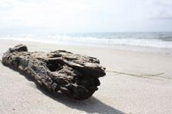 Beachcomb photography