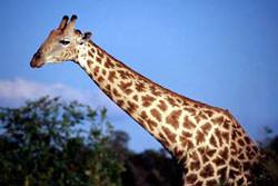 Safari Park photography