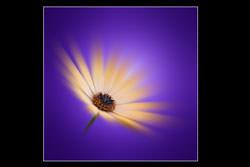 Flower head blur in Photoshop