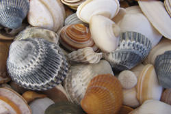 Sea shell photography