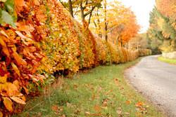 Enhance Autumn shades