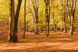 Autumn in Photoshop