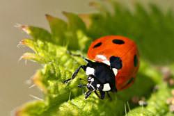 Ladybird photography