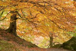 Autumn photography