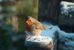 Photographing Winter Birds