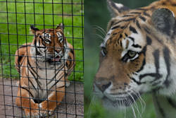 15 Essential Zoo Photography Tips