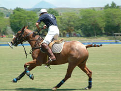 Photographing Polo