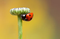 Ladybird Photography tips