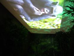 Daniel Beltra exhibition Kew Gardens - projector room