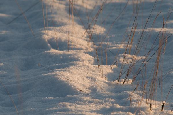Snow - shade
