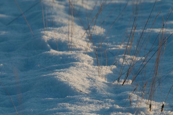 Snow - sunny