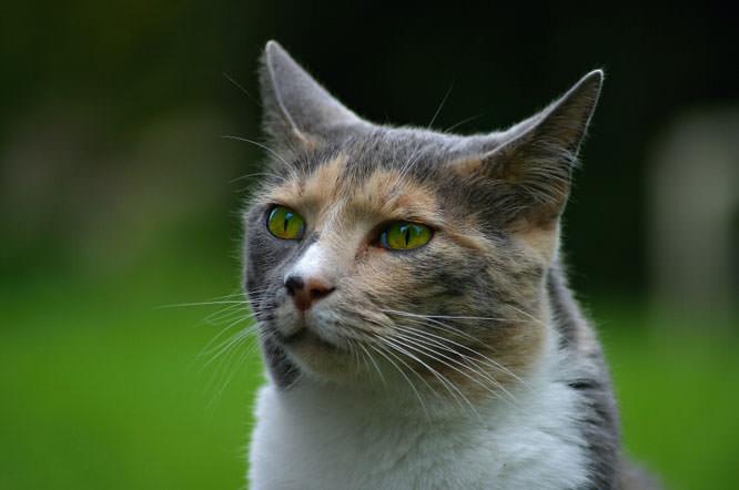 Lollycat