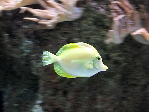 Fish taken with Fujifilm FinePix S200EXR