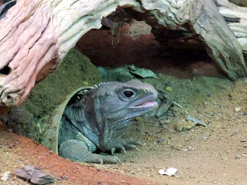 Lizard taken using Fujifilm FinePix S200EXR's Pro Low-Light mode