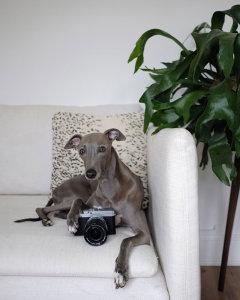 Fujifilm Announce X Phodographer Scheme To Inspire Our Four Legged Friends