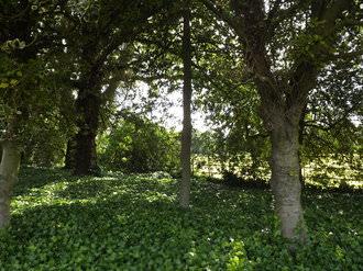 Trees   1/105 sec   f/3.1   4.3 mm   ISO 64